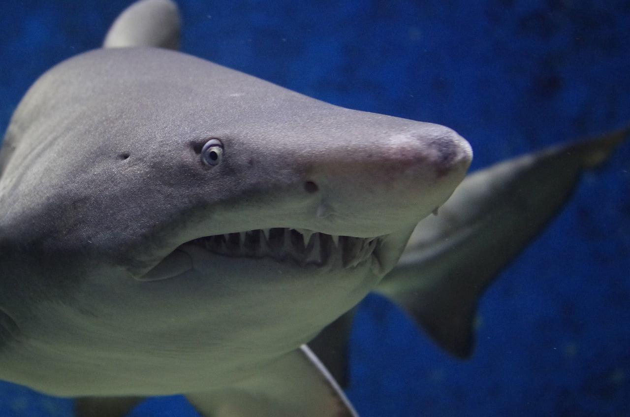 Tiburón photo